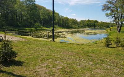 Woekerende waterplanten aangepakt in Tynaarlo