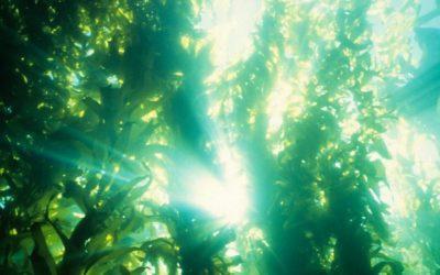 Ontwikkeling norm voor bestrijding van woekerende (invasieve) waterplanten met de harkmethode.